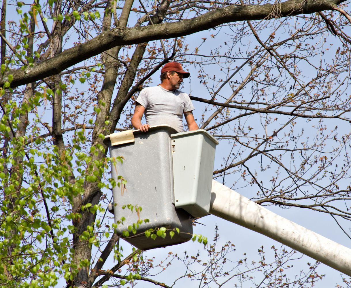 Local tree service crane in Cincinnati, OH