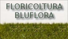 FLORICOLTURA BLUFLORA