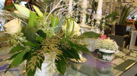 fiori di serra