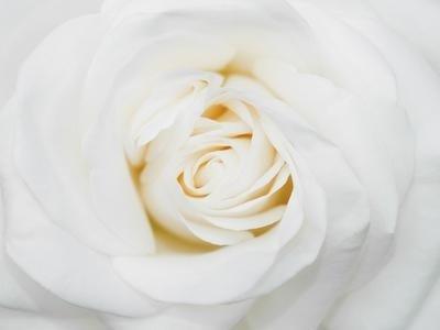 fiori interflora