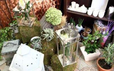 vendita piante macerata