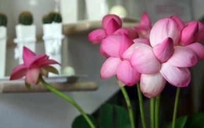 vendita fiori fresch