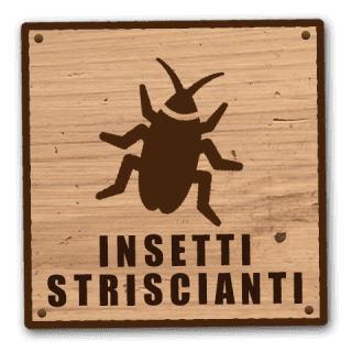 disinfestazione da insetti striscianti