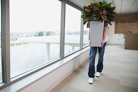 office plants for removal