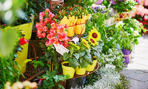 Girasoli e diverse varietà di fiori