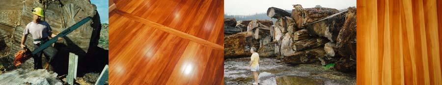 Wood used for timber floors in Auckland