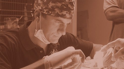 Veterinarian Service Wilmington, NC