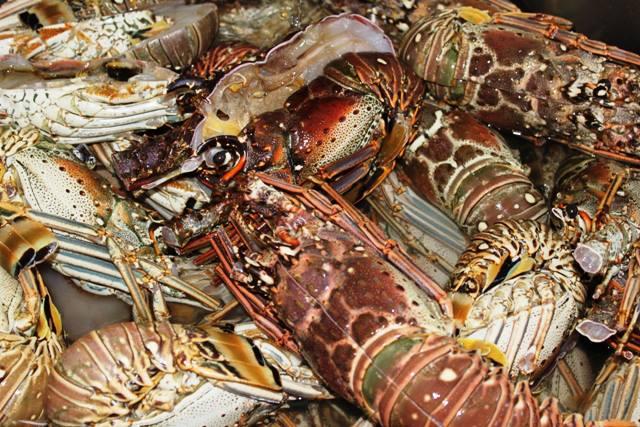 piatto di gamberoni, molluschi e aragosta