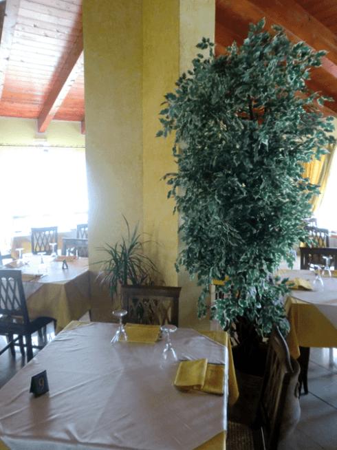 arbusto nella sala di un ristorante