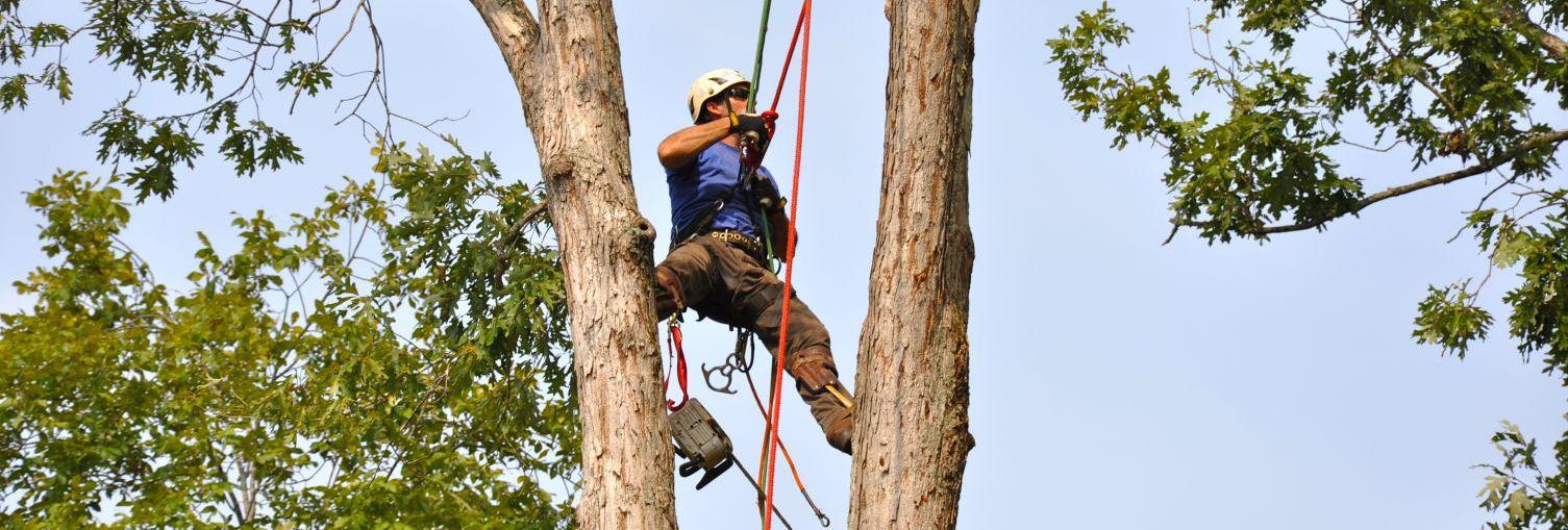 expert tree work in Cornelia, GA
