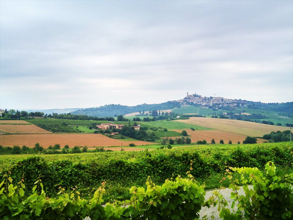 Amazing Winery Hidden Italy Tours