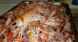 pesce fresco, frutti di mare, cucina di pesce