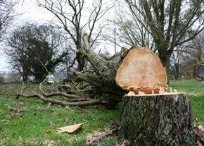 Arboriculturalist - Crewe, Cheshire - Border Tree Care - Tree Surgery