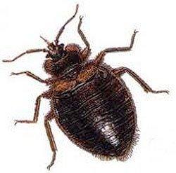 Bed Bug Control Buffalo, NY