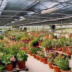 vendita piante, piante ornamentali