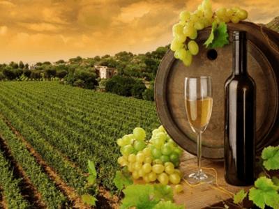 wine production alessandria
