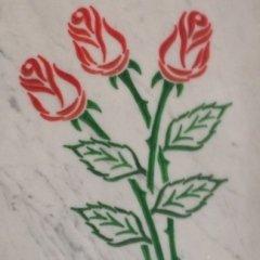 rosa incisa colorata