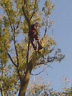 Landscaping services in Cincinnati, OH