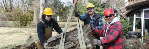 Team performing tree trimming in Cincinnati, OH