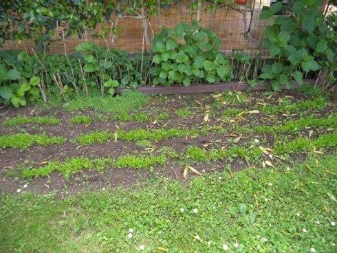 piccolo angolo con orto