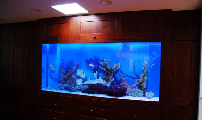 Maintenance Free Fish Tank Ny Aquarium Maintenance