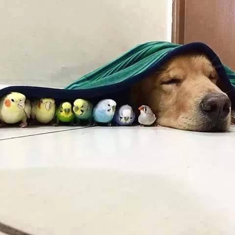 dog asleep next to a line of birds