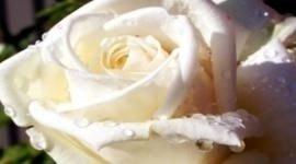Fiori per matrimoni, bouquet sposa