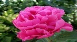 Composizioni con fiori