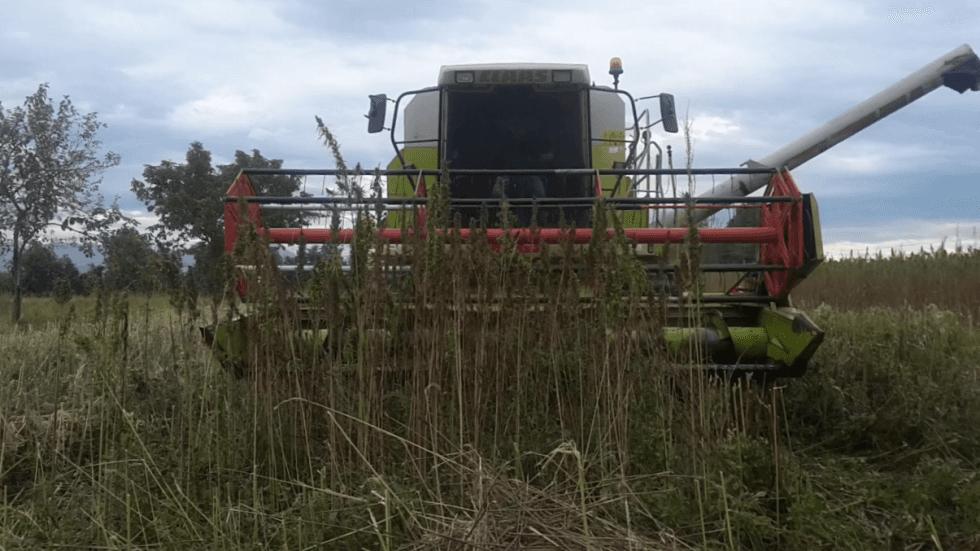 raccolta seme
