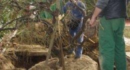 trapianto alberi e piante
