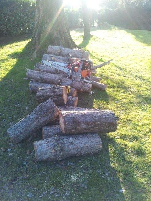taglio tronchi