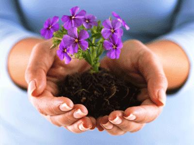 fiori genova