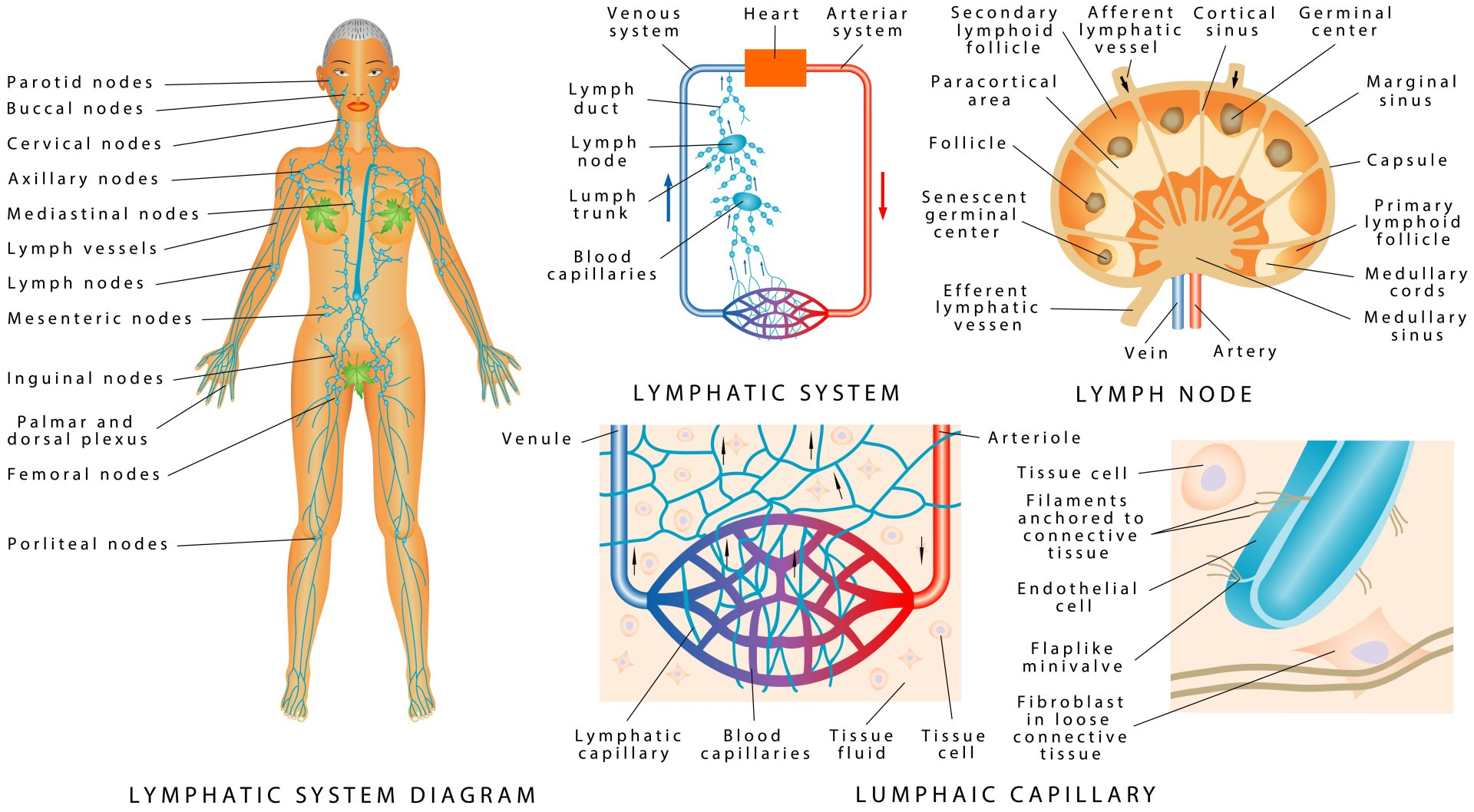 Medicuppinglymphatic Drainage In Jackson Tn 38305 I New Dimensions