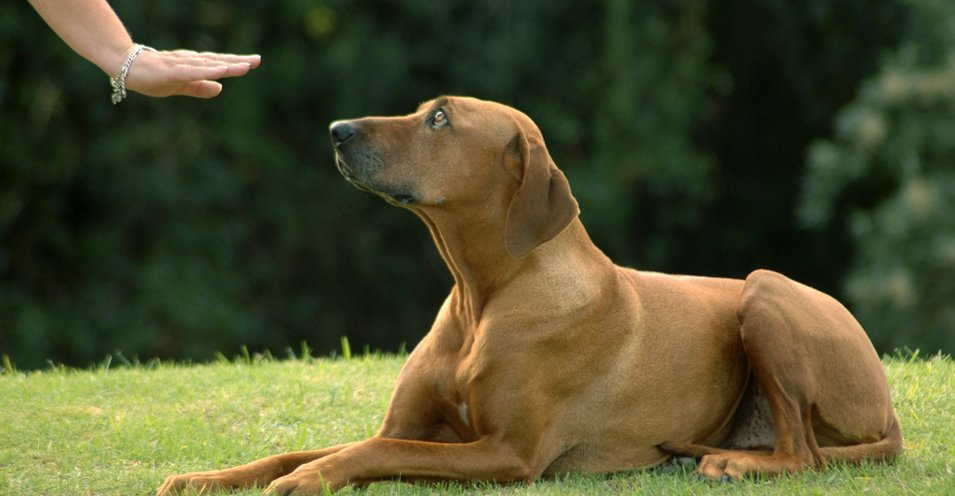 Deaf Dog Training Throughout The East Midlands