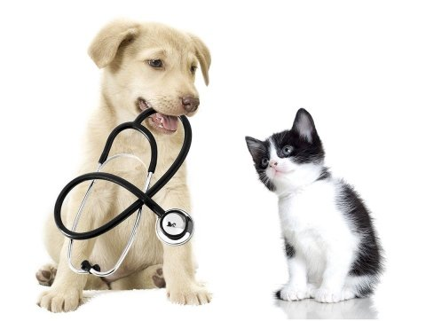 clinica veterinaria che serve Firenze e Siena