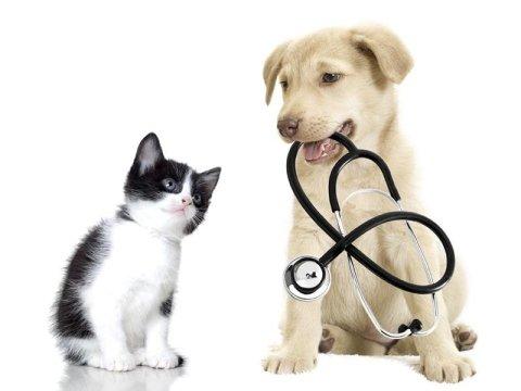prodotti di veterinaria