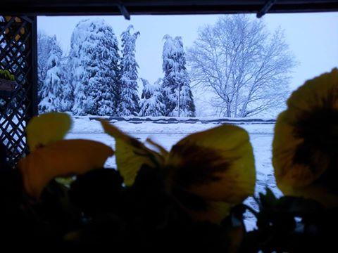 dei fiori gialli e degli alberi innevati