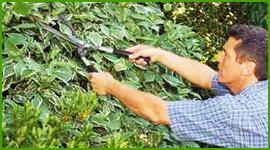 potatura piante