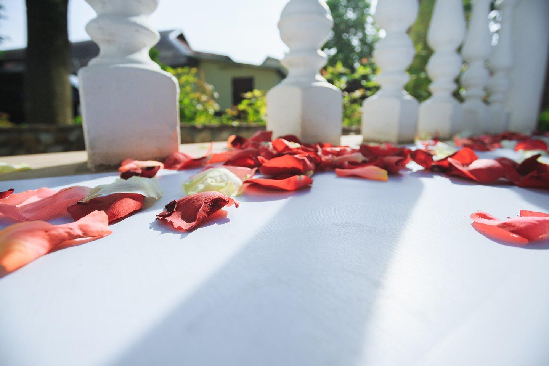 petali di rosa rossa e bianca