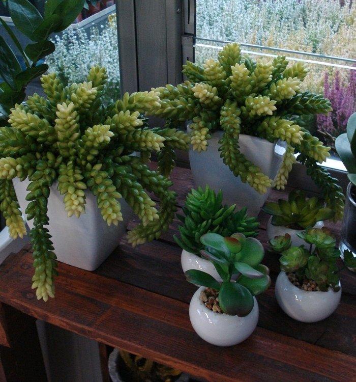 piante per interno
