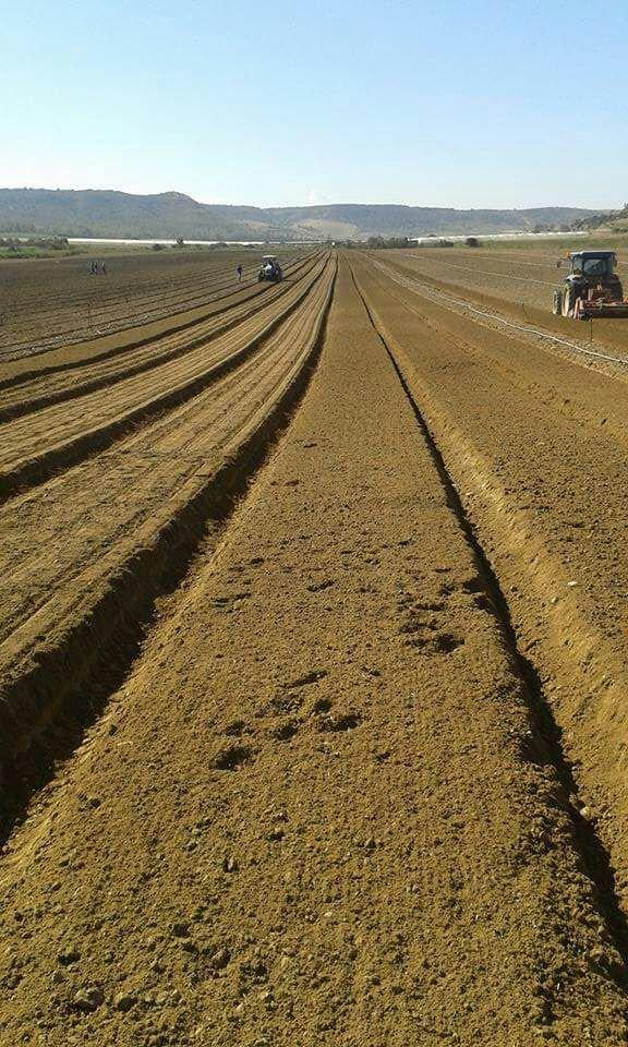 Vista lunga di campo arato privo di colture