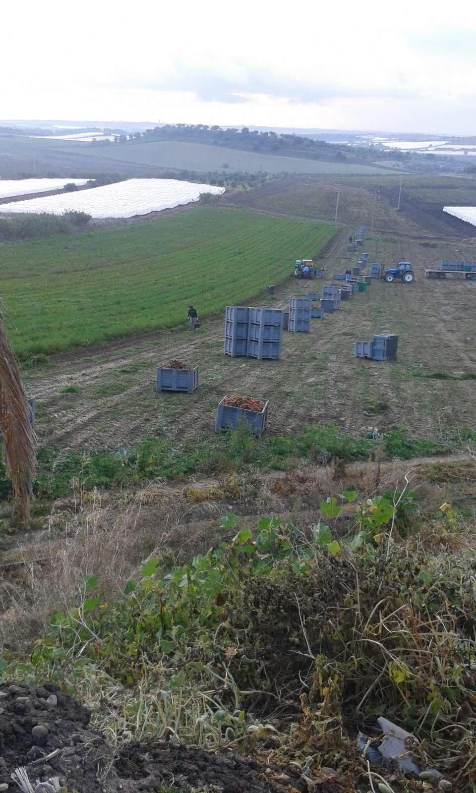 Vista dall'alto di un campo con containers di carote