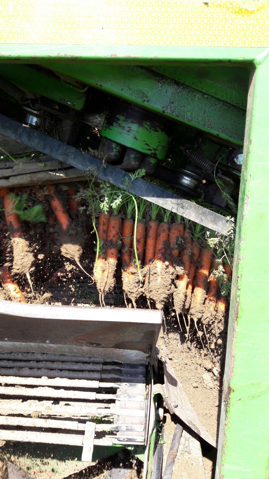 Primo piano di macchinario agricolo che estrae carore da un campo