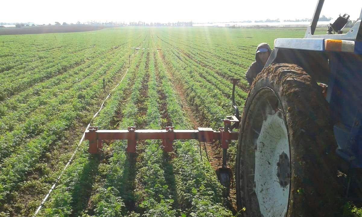 lavorazione carota bio