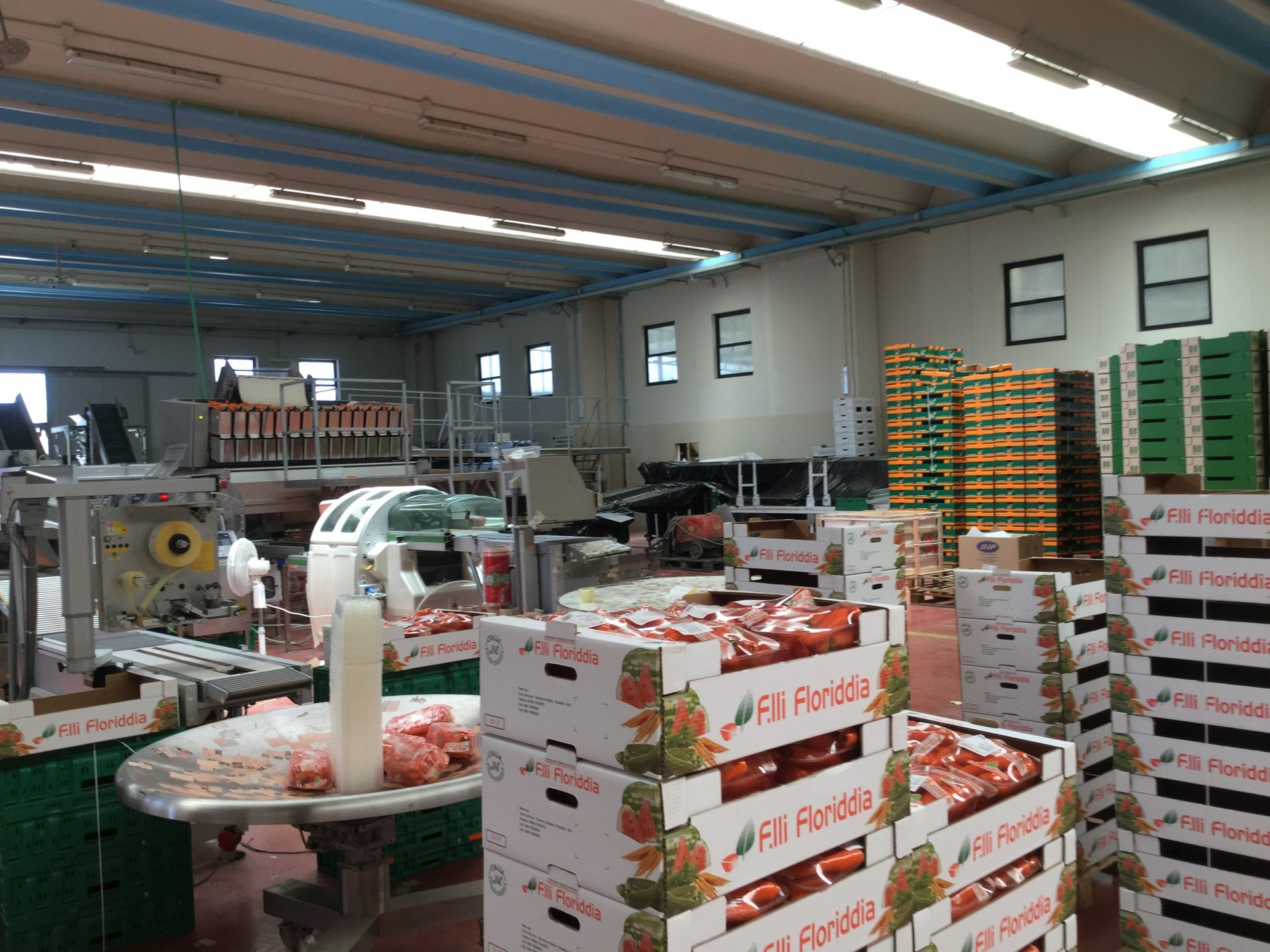 Cassette di carote nel laboratorio dell'azienda agricola