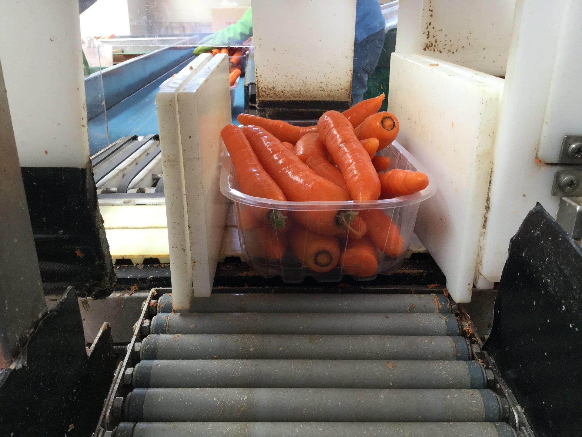 carote in confezione sul rullo