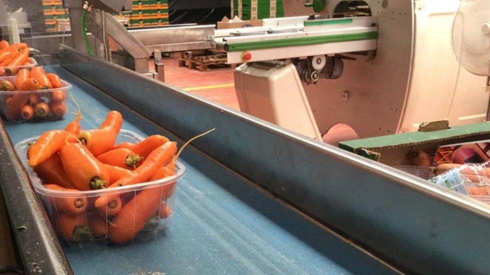 vaschetta di carote su nasrto
