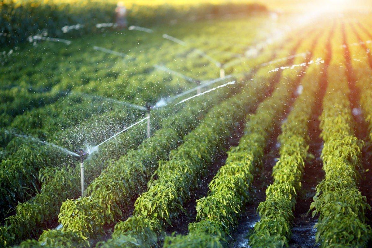 Irrigazione di un orto