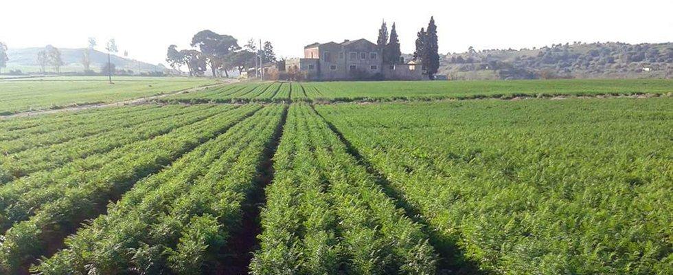 Panoramica di un campo di verdura