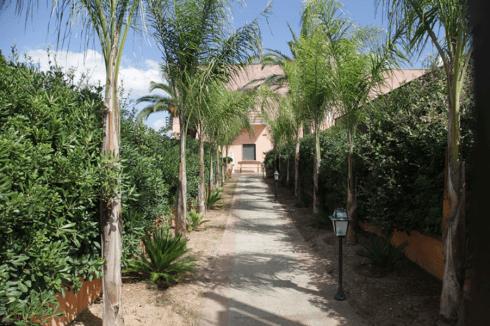 un lungo sentiero attorniato di palme e siepi